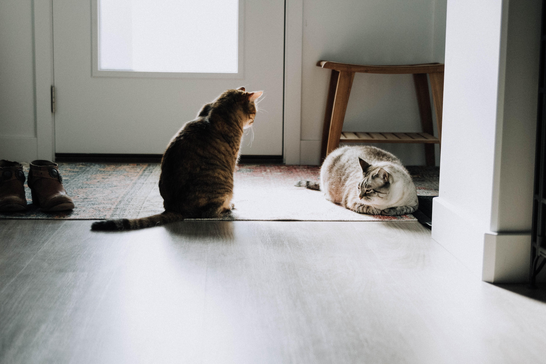 catbitches-8